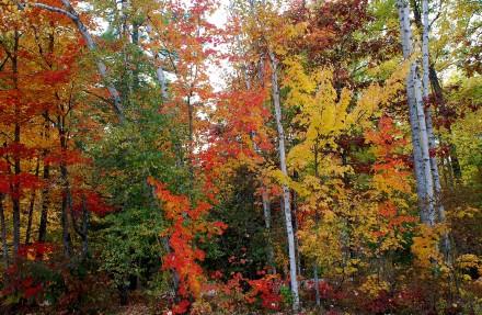 fall-foliage-2