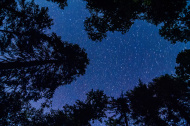 stock-photo-25269032-evergreen-trees-with-stars