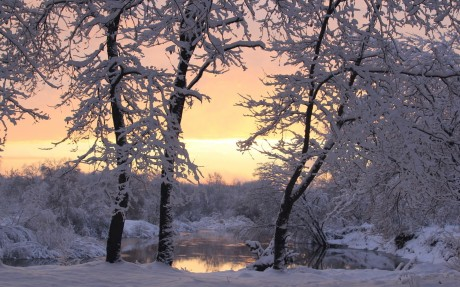 Winter_Snow-covered_trees_at_the_lake_046387_