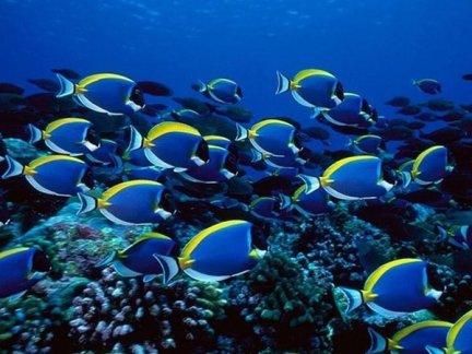 4553514-More-Underwater-Fish-1