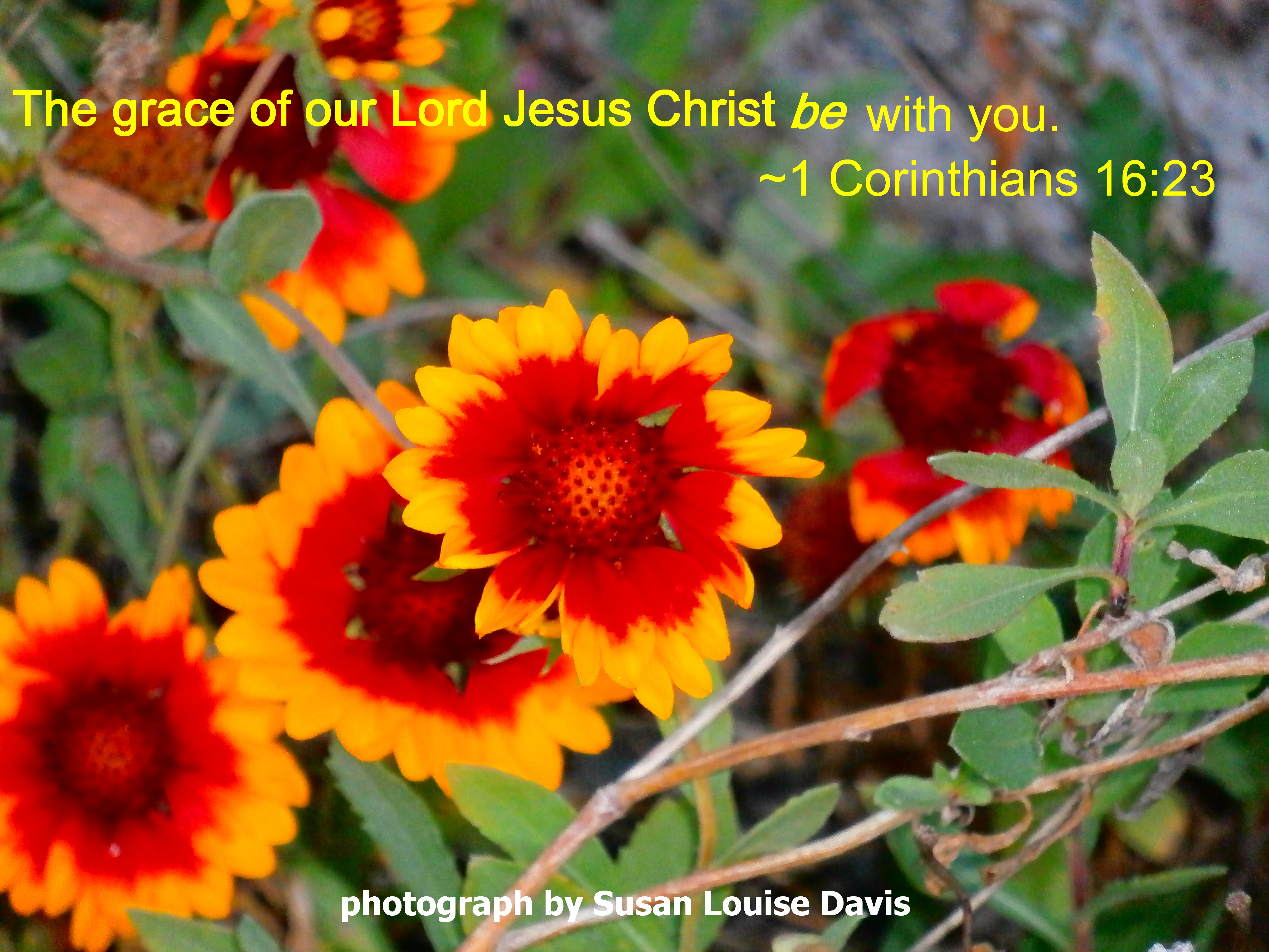Bible Grace And Peace To You Corinthians