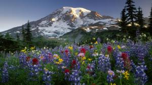 nature-mountin-flowers