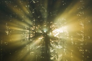 sun-beams-through-forest-300x199