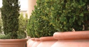 topiary-124766055_0