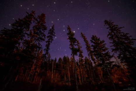 I am new to shooting at night but one of the things I loved about shooting at night in the forest is how camp fires light up the trees. The orange glow on these trees is from a camp fire about 200 meters away.