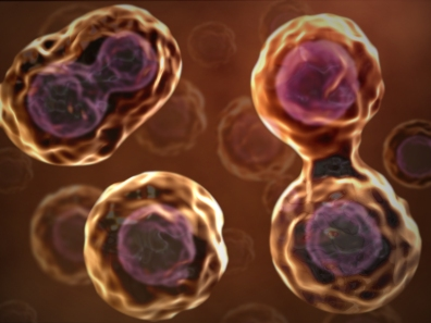 cells-dividing
