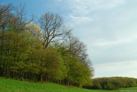 spring-forest