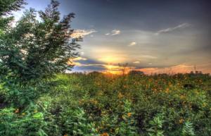 illinois-chain-o-lakes-state-park-beautiful-sunset