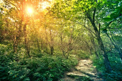 """A pathway through the forest with bright sunlight."""