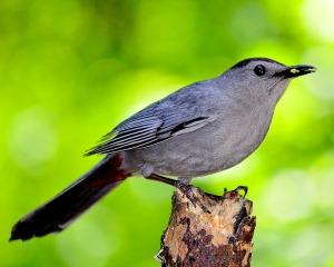 bird-1398362_960_720